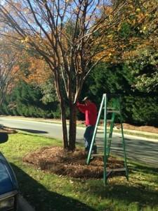 Install Christmas Lights on Tree