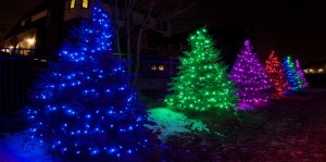 Colorful Christmas Light Installation on Trees