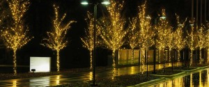 Commercial Christmas Trees Lights Installed