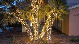 lights-on-palms