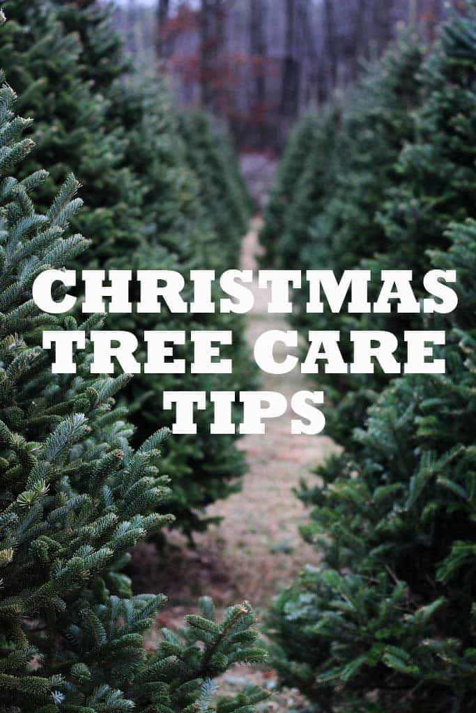 Christmas Tree Care Tips