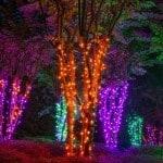 Halloween Christmas Lights