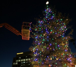Commercial Christmas Tree Installation