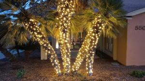 lights-on-palms