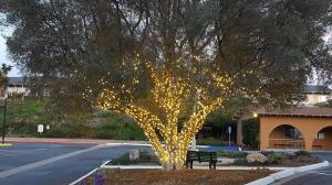 lights-on-tree